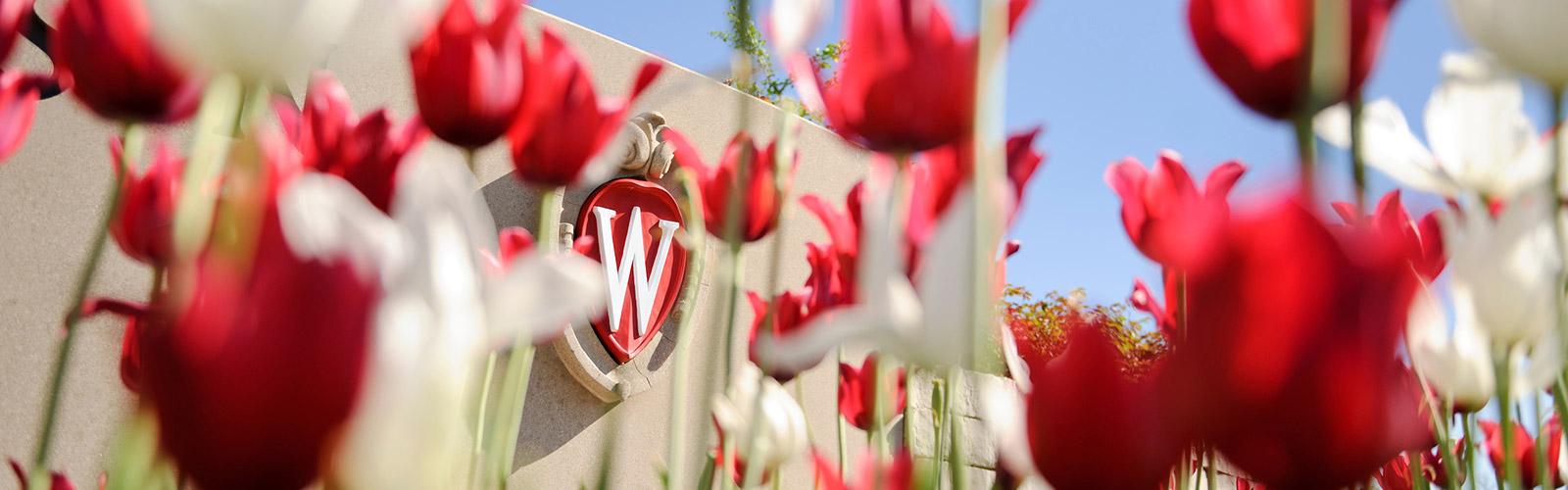 crest-tulips-1600